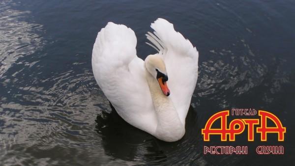 http://arta.org.ua/media/k2/items/cache/eefd4fe8f589e64e0e66a4f2937ae4ae_XS.jpg